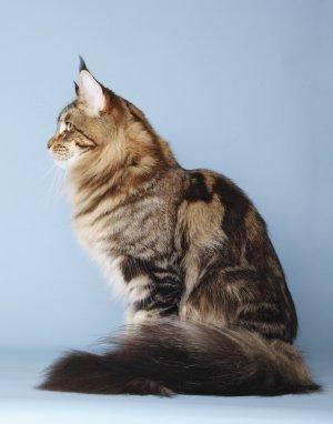 Petra Garbe (Penogacats)