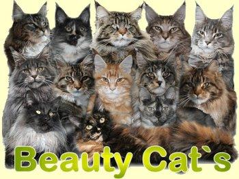 Manuela Lindeke (beautycats)